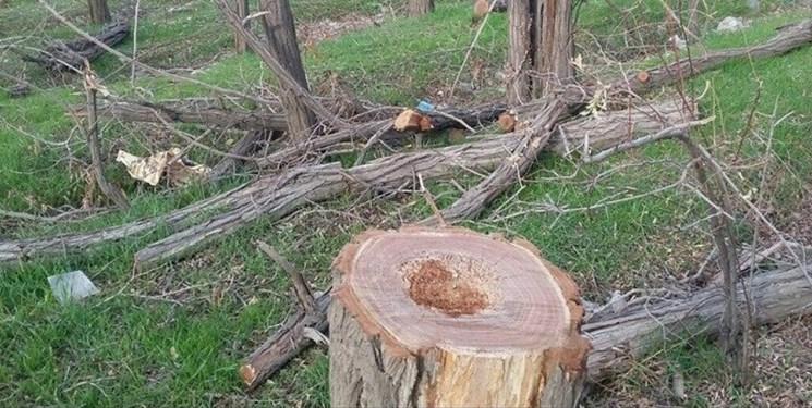 دستهای پشت پرده قطع درختان اردوگاه دانشآموزی قوچان / مسئولان آموزشوپرورش از خواب زمستانی بیدار شدند