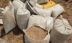 مقابله با قاچاق گندم در کرمانشاه/ دادستان: نظارتها در مبادی ورودی و خروجی افزایش یابد