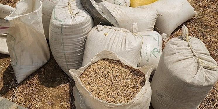 خرید تضمینی بیش از ۲۰ هزار تن گندم از کشاورزان مازندران