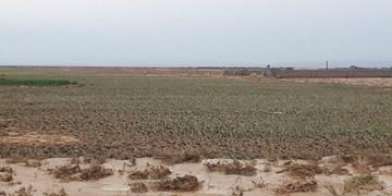 خسارت ۷۰ میلیاردی کشاورزان جاجرمی از بارش تگرگ