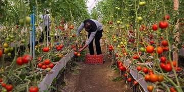 بخش کشاورزی نیازمند سرمایهگذاری/ ساختار اقتصادی آذربایجانغربی کشاورزی است
