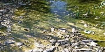 مرگ بیپایان ماهیها در رودخانه سیمره/ موضوعی که مهم نیست!