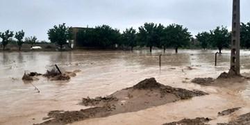 شکسته شدن ۱۷ سیل بند در پی بارش سیلآسای گناباد/ ۲۸۰ رأس گوسفند تلف شدند