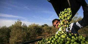 اجرای طرح توسعه، اصلاح و جایگزینی باغات در ۵۵۰۰ هکتار از باغات قزوین