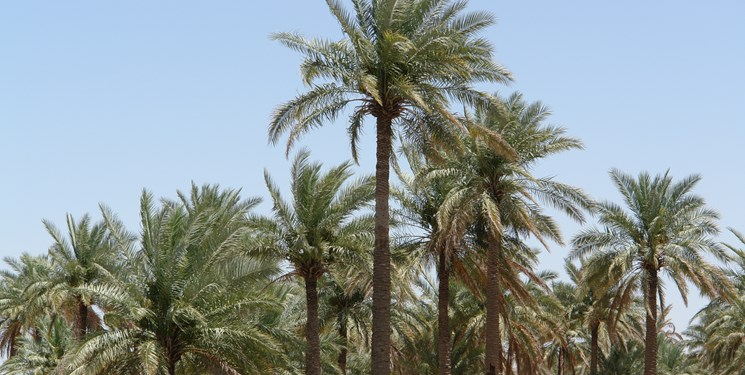 واکنش نماینده شادگان به مصاحبه استاندار خوزستان/ مسوولان نمک روی زخم مردم نپاشند