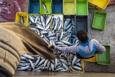 مجتمع پرورش ماهیان «دیوزناو»