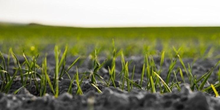 اجرای برنامهای ملی برای گسترش کشاورزی زیستی در کشور