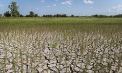 کلیپ  خسارت بالای خشکسالی به کشاورزی لرستان