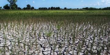 ماجرای پرداخت ۴۰۰ میلیاردی تنخواه برای حل مشکل آب کشاورزی و آشامیدنی