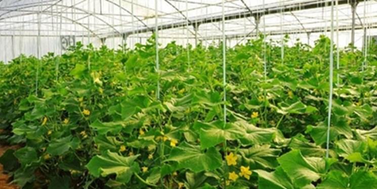 الزام وزارت جهاد کشاورزی به «صدور مجوز برای شهرکهای کشاورزی و دامپروری غیردولتی»