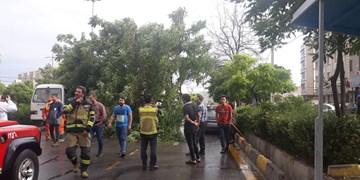 طوفان در قزوین موجب سقوط درختان بر روی خودروها و پاره شدن کابلهای برق شد