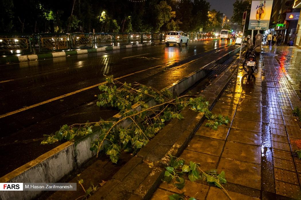 شکسته شدن و افتادن برخی شاخه های درختان پس از وقوع باد و باران شدید در پایتخت - خیابان انقلاب