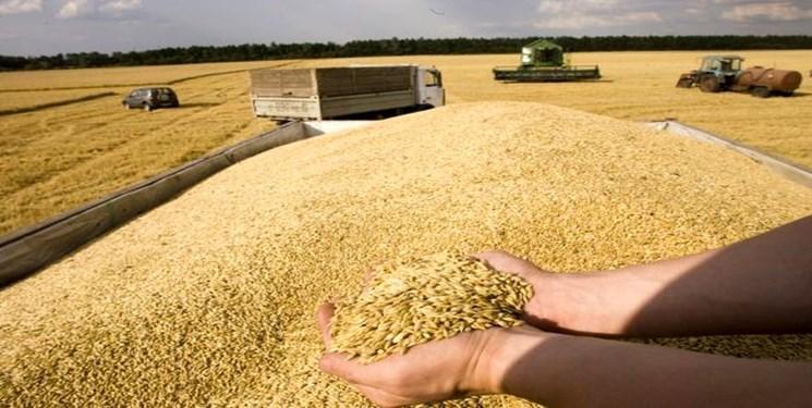 نیاز به واردات 5 میلیون تن گندم در سال جاری/دولت امسال تنها 5 میلیون تن از کشاورزان خرید