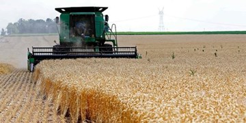 خرید گندم از کشاورزان سیستان و بلوچستان به مرز ٢٠ هزار تن رسید