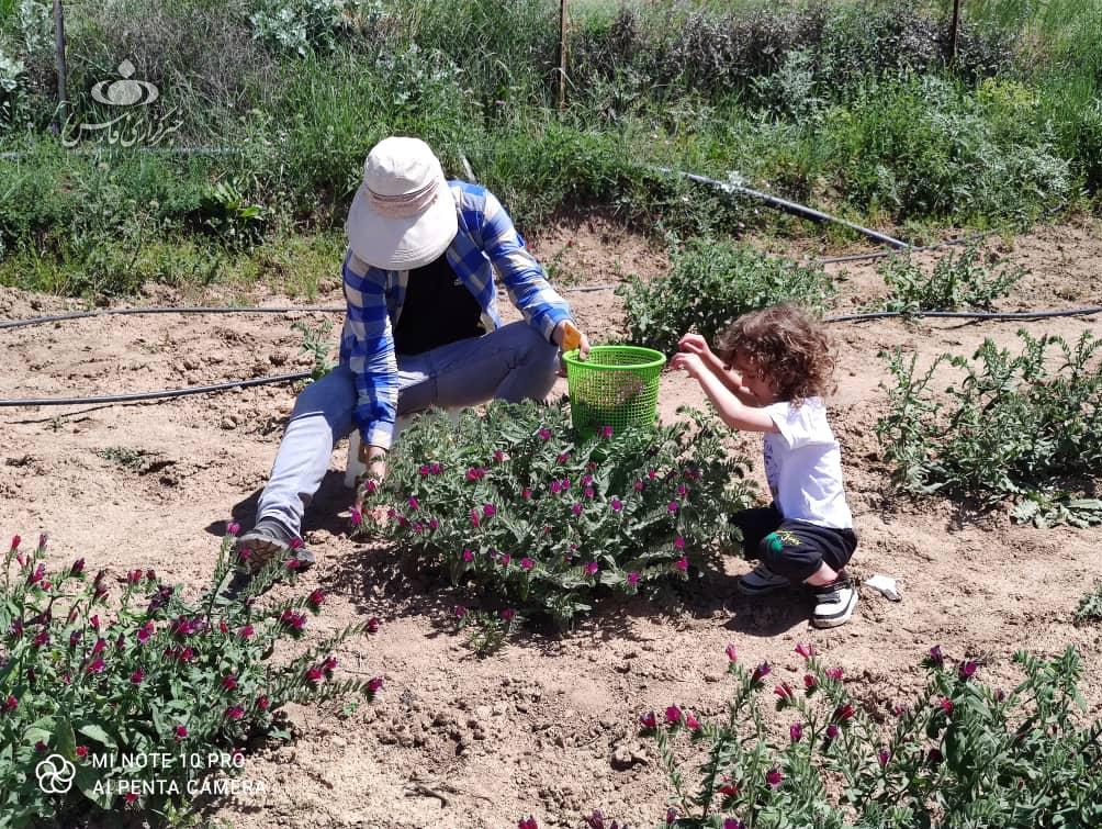 امام روستایی که با کشاورزی 60 هزار نفر را شاغل کرده است+عکس
