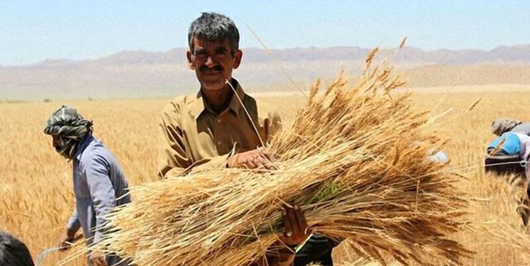افزایش شدید قیمت گندم و خوراک دام در بازارهای جهانی/ دولت برنامه کاهش وابستگی را تدوین کند