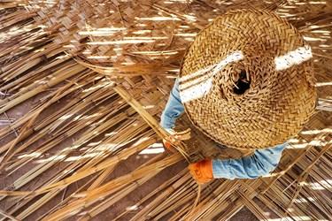 بوریا باف بر روی زمین نشسته و تعدادی ساقههای شکافته و تخت شده را در کنار هم میچیند و یک پود خیزران یا نی را با زاویه قائمه میبافد و از یک نوع بافت جناغی استفاده میکند.