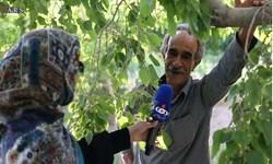 فیلم| چرا باید رأی بدیم؟/نظر کشاورزان یزدی در مورد انتخابات