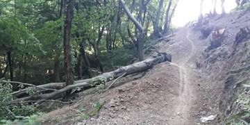 واکنش دادستان لنگرود به قطع درختان دیوشل/عاملان تخریب محیطزیست باید پاسخگو باشند