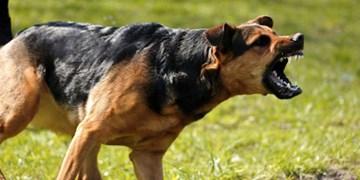 سگهای ولگرد تهدیدی جدی برای حیات وحش استان یزد
