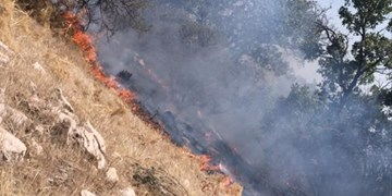 شبلیز زیبا همچنان در آتش میسوزد+فیلم و تصاویر