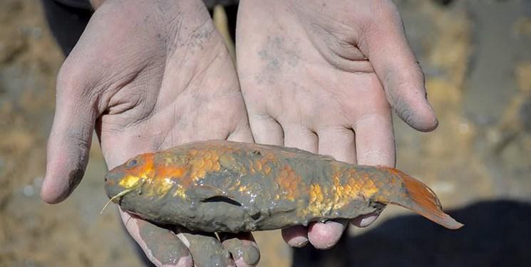 سهلانگاری کشاورزان عامل مرگ ماهیان گاماسیاب/ لزوم دفع اصولی ظروف سموم کشاورزی