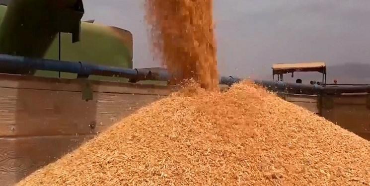 ثبت رکورد جدید افزایش قیمت گندم در بازارهای جهانی/هشدار برای توجه بیشتر به محصولات اساسی