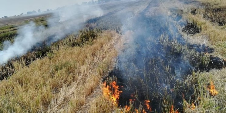 اثرات زیانبار آتش زدن کاه و کلش در کمین محیط زیست