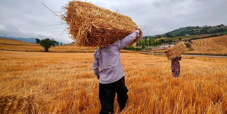خرید بیش از 109 هزار تن گندم مازاد بر نیاز کشاورزان در قزوین/ پرداخت 5327 میلیارد ریال از مطالبات گندمکاران