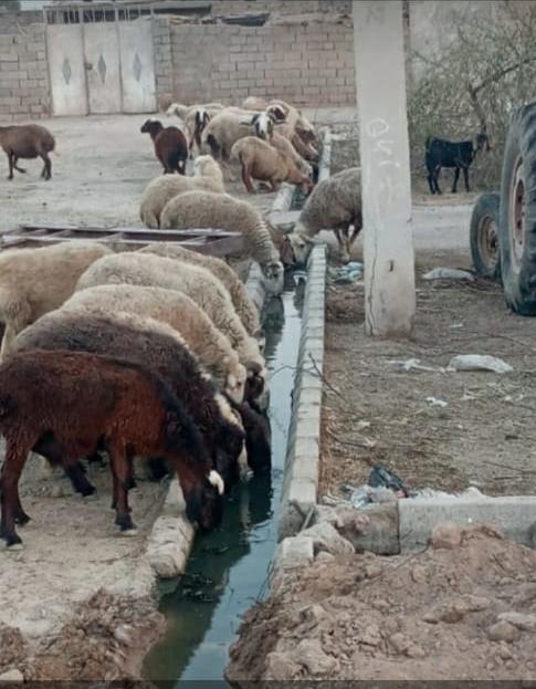 وضعیت آب شرب دام در روستاها به دلیل قطع آب کرخه