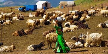 زندگی عشایر در ییلاق