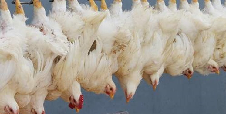 انحراف در شبکه توزیع گوشت مرغ/چرا قیمت در بازار چند برابر میشود؟