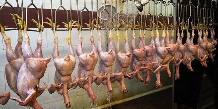 روزانه 7 تن گوشت مرغ در قروه مصرف میشود/فعالیت 40 واحد مرغداری در قروه
