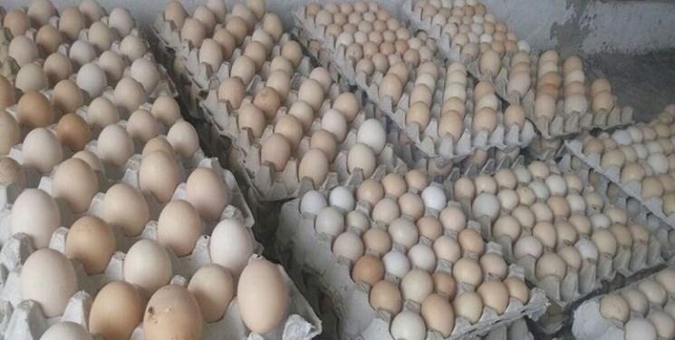 افزایش 10 درصدی جوجهریزی در تابستان/ واردات ۹۵ میلیون عدد تخم مرغ نطفهدار