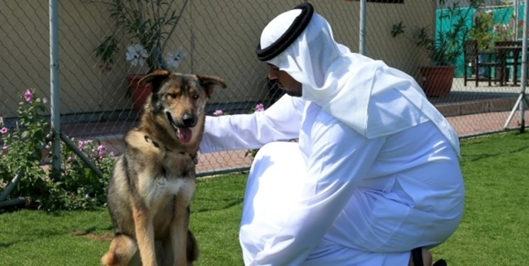 قوانین سختگیرانه کشورهای حاشیه خلیج فارس برای «سگگردانی»