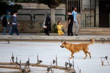 برخی از سگها در پارکهای پایتخت ولگرد هستند