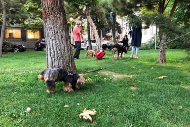 سگگردانی در پارکها