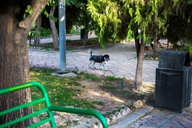 سگگردانی در پارک خانه هنرمندان تهران