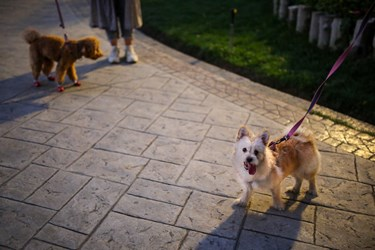 سگگردانی در پارک نیاوران تهران