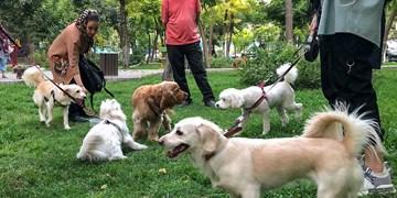 چراغ سبز شورای شهریها به سگ گردانی /پلیس: با سگگردانی برخورد میکنیم