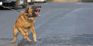 حکم «نجاست سگ» از کجا آمده است؟
