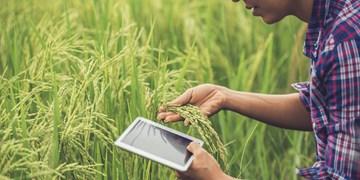 بازاریابی اینترنتی محصولات کشاورزی