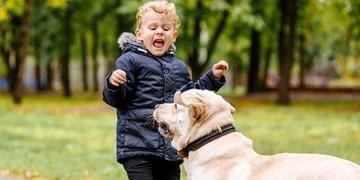 فیلم  مطالبه شهرکردیها در خصوص سگگردانی/ مسئولان امنیت فرزندان ما را تامین کنند