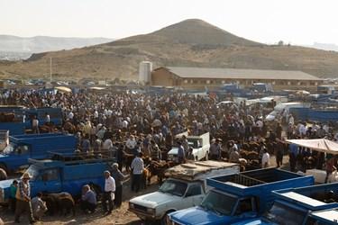 نمای عمومی بازار هفتگی دام خسروشاه را نشان می دهد. مردم شهرستانهای استان برای خرید و فروش دام به مناسبت عید سعید قربان در آن جمع شده اند.
