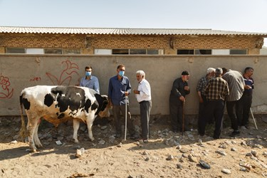 دامداران برای خرید گاوی در کنار دیواری در بازار دام خسروشاه مشغول صحبت و چانه زنی هستند.