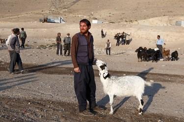 مردی کنار گوسفند خود در انتظار آمدن مشتری ایستاده است.
