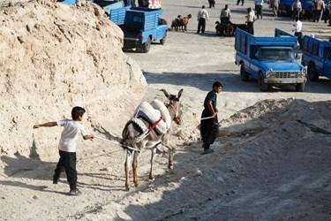 پسران نوجوان برای گذراندن یکی از روزهای تعطیلات تابستانی خود به همراه پدرشان به بازار دام و حیوانات خسروشاه آمده اند، در حال راه بردن الاغ هستند.