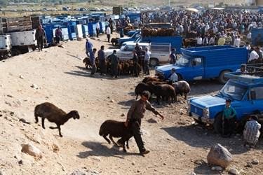 نمایی از بازار هفتگی دام و حیوانات خسروشاه