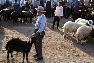 پیرمردی در حالیکه بند گوسفند خود را در دست گرفته است، در انتظار آمدن مشتری ایستاده است.