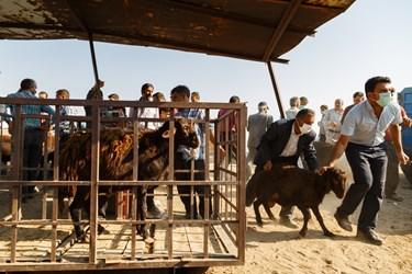 مردی بعد از خرید گوسفند و وزن کردن آن، آن را به کمک مرد همراه خود به سمت خودرواش هدایت می کند.